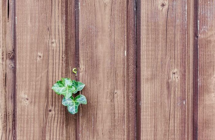 Oplotenie pozemku kvalitným drevom